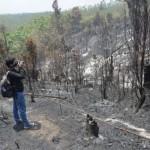 Ilustrasi kebakaran hutan | Foto: Ist