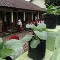 SD Negeri Kramat I Kota Magelang, Jawa Tengah, menerapkan budidaya tanaman organik di halaman sekolahnya | Foto: Ika Fitriana