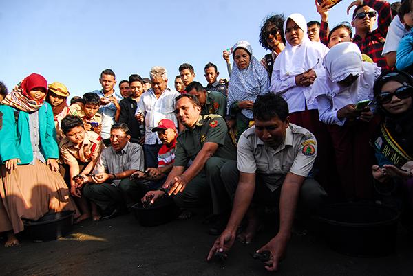 FOTO: Pelepasan Tukik di Pantai Syiah Kuala