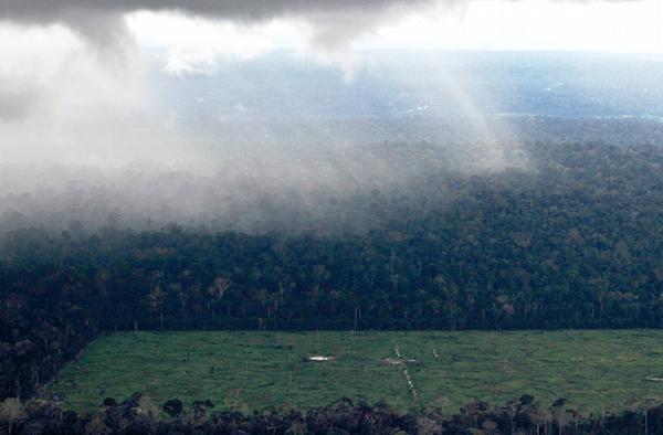 Perlindungan hutan global cara brasil