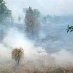 Ilustrasi hutan terbakar   Foto: CIFOR