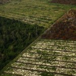 Wilayah hutan yang telah dibakar di Riau | Foto: reuters