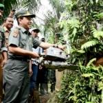 Kadishut Prov Aceh - Husaini Syamaun memotong Sawit ilegal